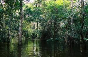 Foresta-Amazzonica